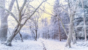 Frosty Morning in Forest
