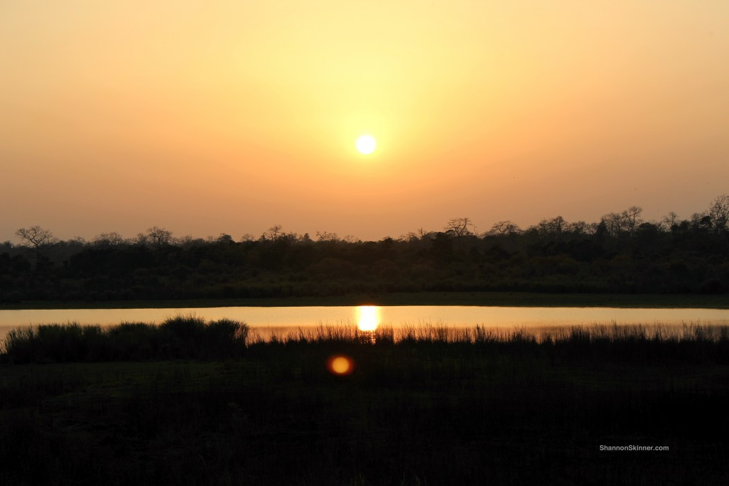 sunset in Kaziranga National Park, India