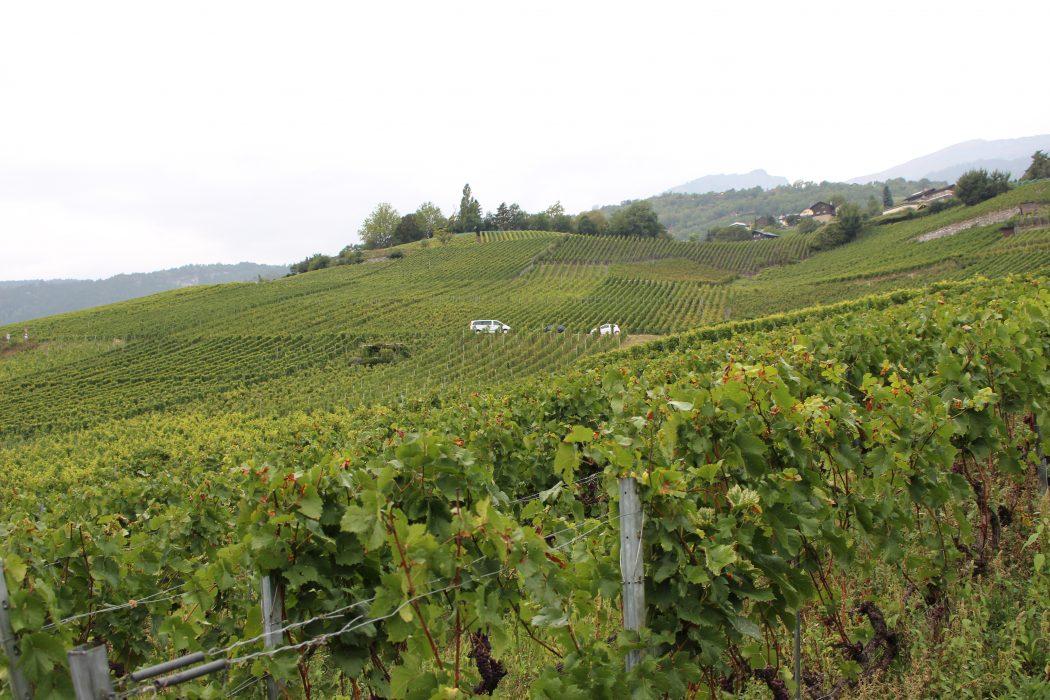 Marche des Cepages, wine, switzerland, swiss, valais, valaiswallis, festival, travel