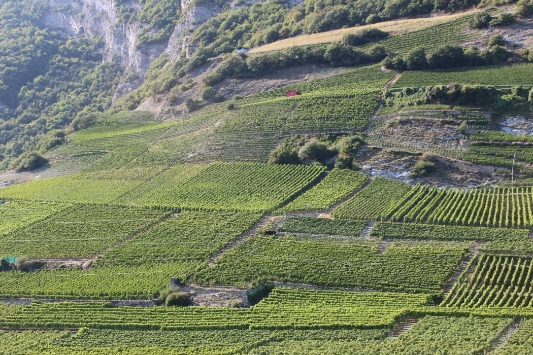 saillon, valais, switzerland, vineyard, dalai lama, wine, travel, tourism