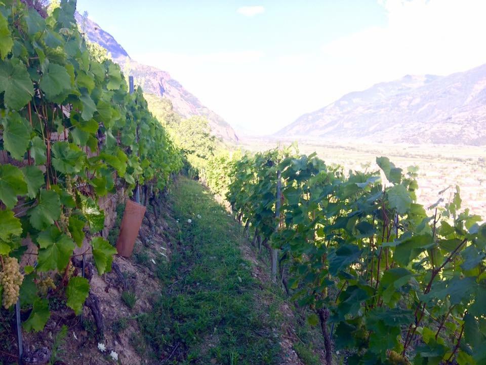 valais, fully, vineyard, wine, winemaker, women winemaker, travel, tourism, swiss, switzerland